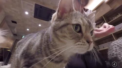猫360度VR動画