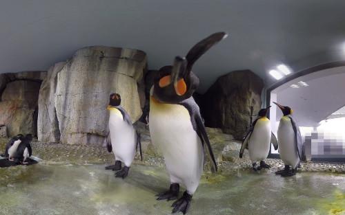 無料VR動画まとめ「ペンギン」