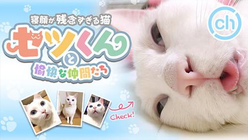 無料VR動画「猫のセツくん」