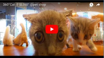 YoutubeVRのおすすめ動画「猫カフェ」