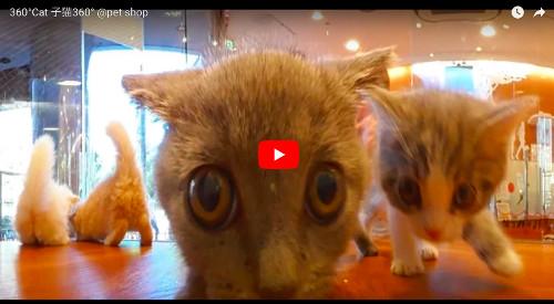 猫のVR動画