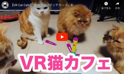 VR猫カフェ